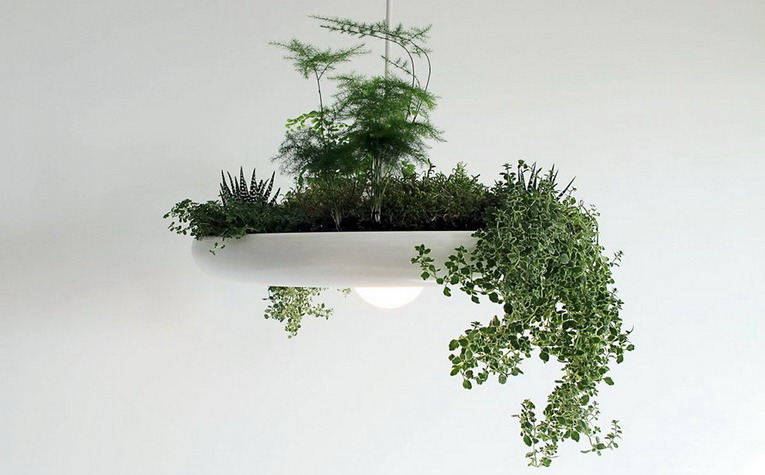Hanging garden: lamp and pot for indoor plants at the same time