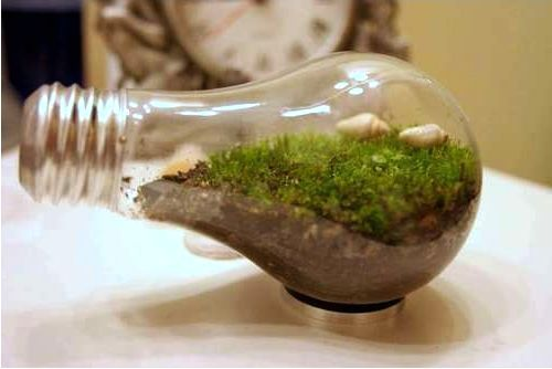 Terrarium of light bulb
