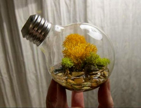Vase for moss from a light bulb
