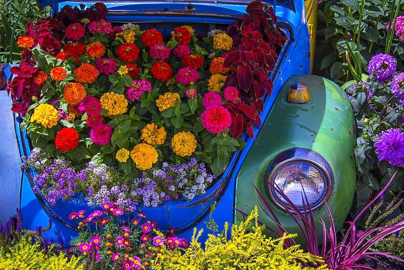 bright flower bed of a car