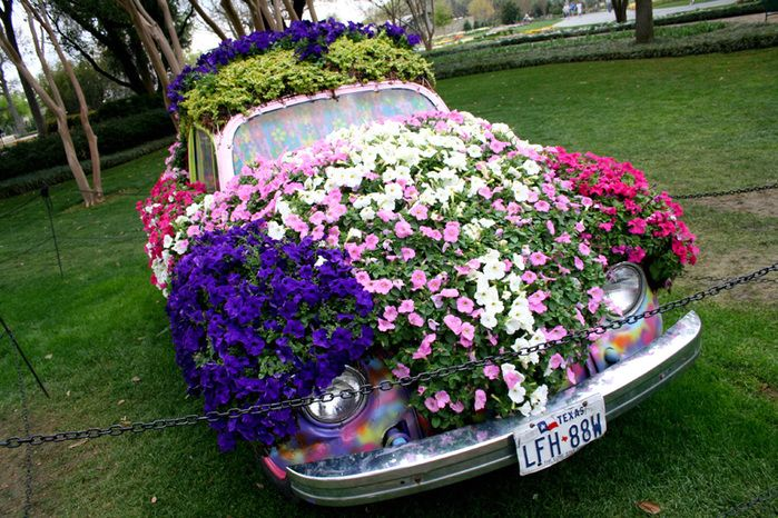 original flower bed of the car