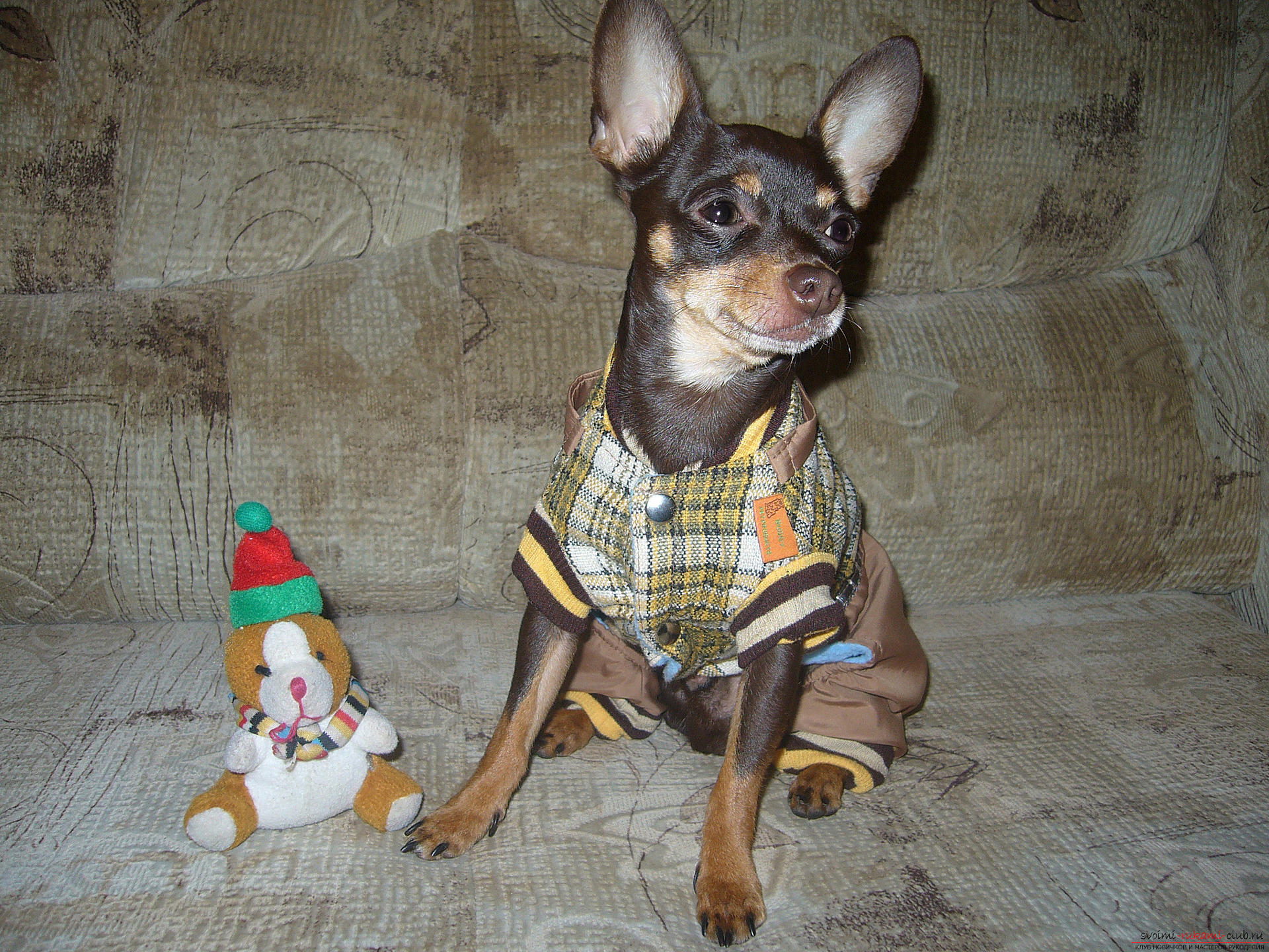 Pattern of warm overalls and costume for the toy terrier: master class with description and photo. Photo №4