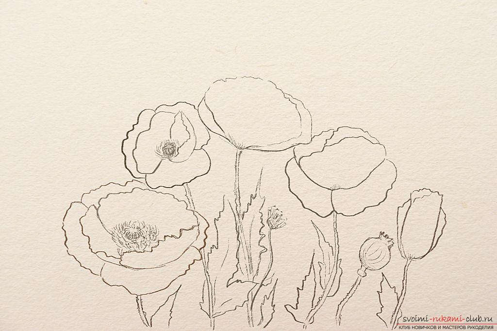 Drawing a poppy in pencil step by step. Photo №4