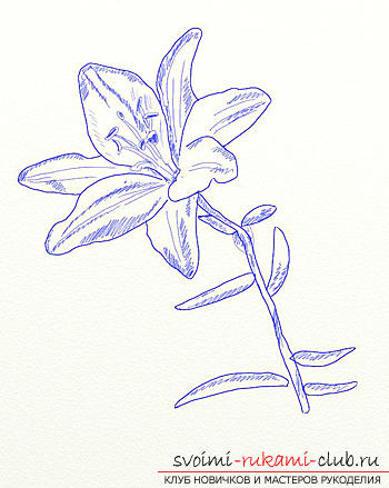 Drawing a lily in stages. Photo №6