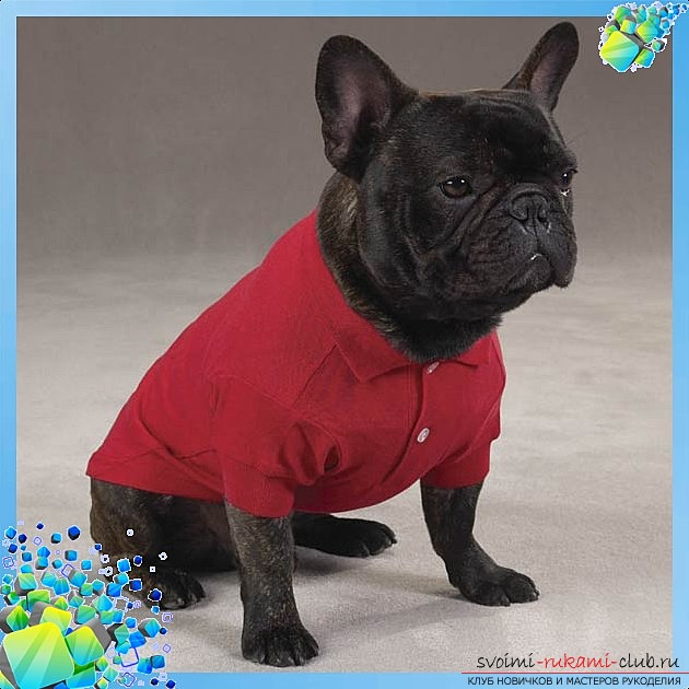 photo of the original shirt pattern for your dog. Picture №3