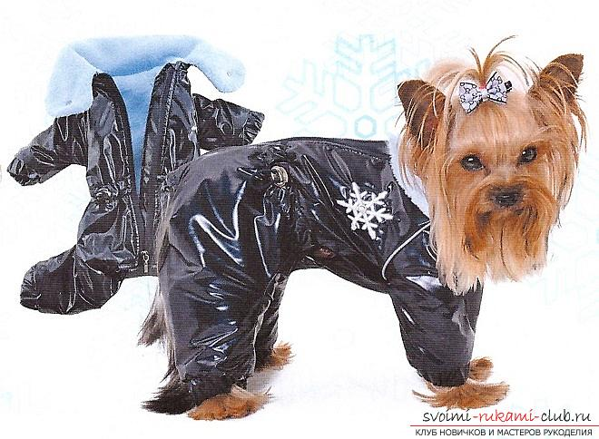 Warm clothes for Yorkies with their own hands. Photo №5