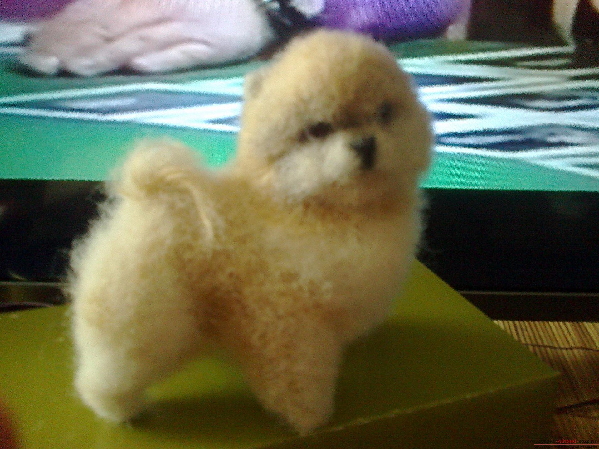 The original toy is a dog made in the technique of dry felting. Photo №1