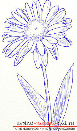 How to draw a daisy in the technique of stage-by-stage drawing. Photo №5