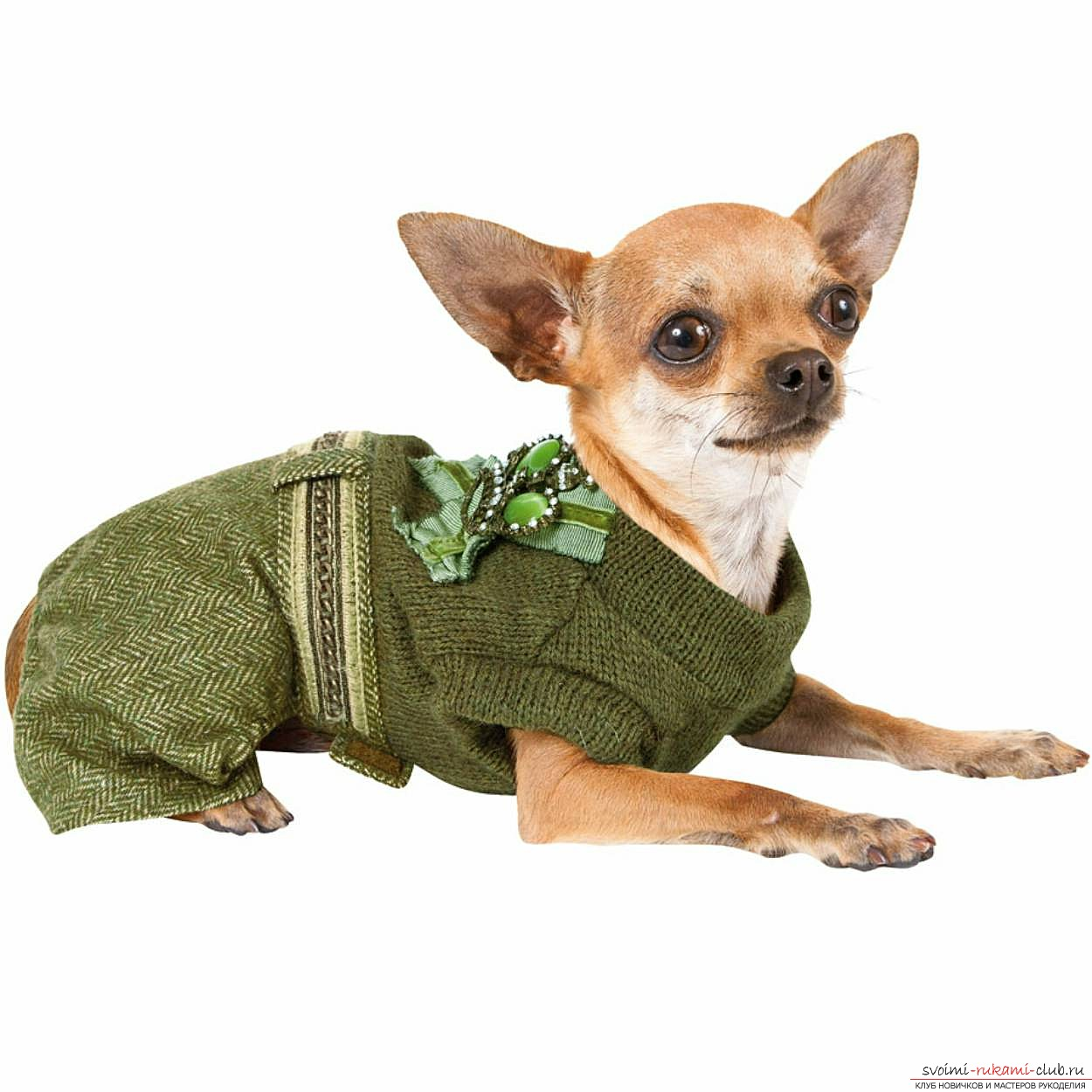 a pattern of a warm waterproof overall for a dog. Photo №1