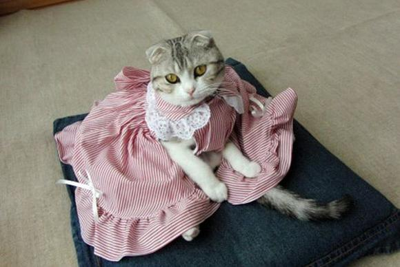 Clothes for cats, made by own hands. Clothing for pets is stitched for free .. Picture №3