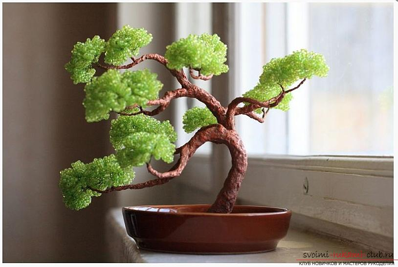 How to make a bonsai tree of beads with your own hands, several master classes of creating bonsai in different color solutions, step-by-step photos and description. Picture №30
