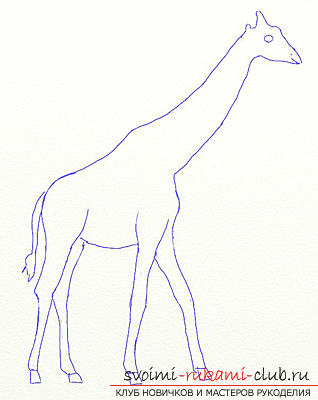 Step by step drawing the giraffe in pencil. Photo №4