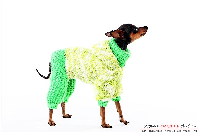photoinstruction of a pattern of overalls for toy-terrier. Photo №1
