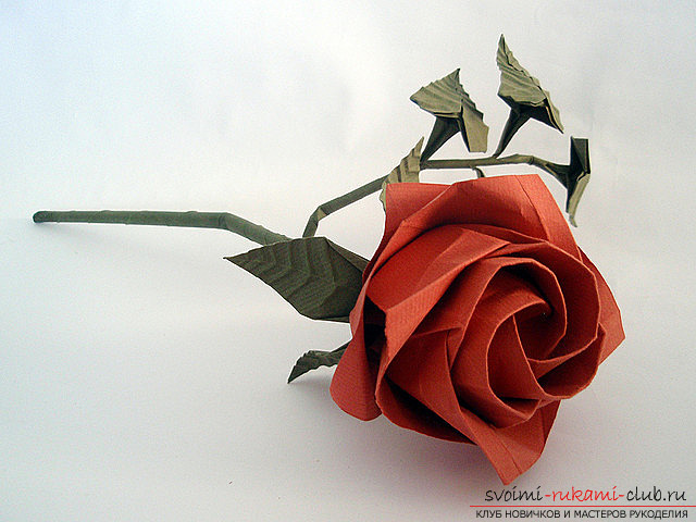 Rose-origami for novice paper masters - a scheme for work and a master class. Picture №3