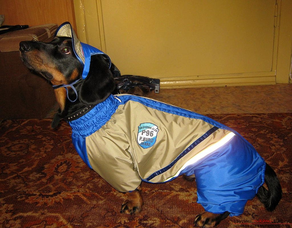 a pattern of a warm waterproof overall for a dog. Photo №4
