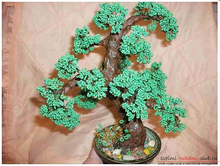 How to make a bonsai tree of beads with your own hands, several master classes of creating bonsai in different color solutions, step-by-step photos and description. Photo №1