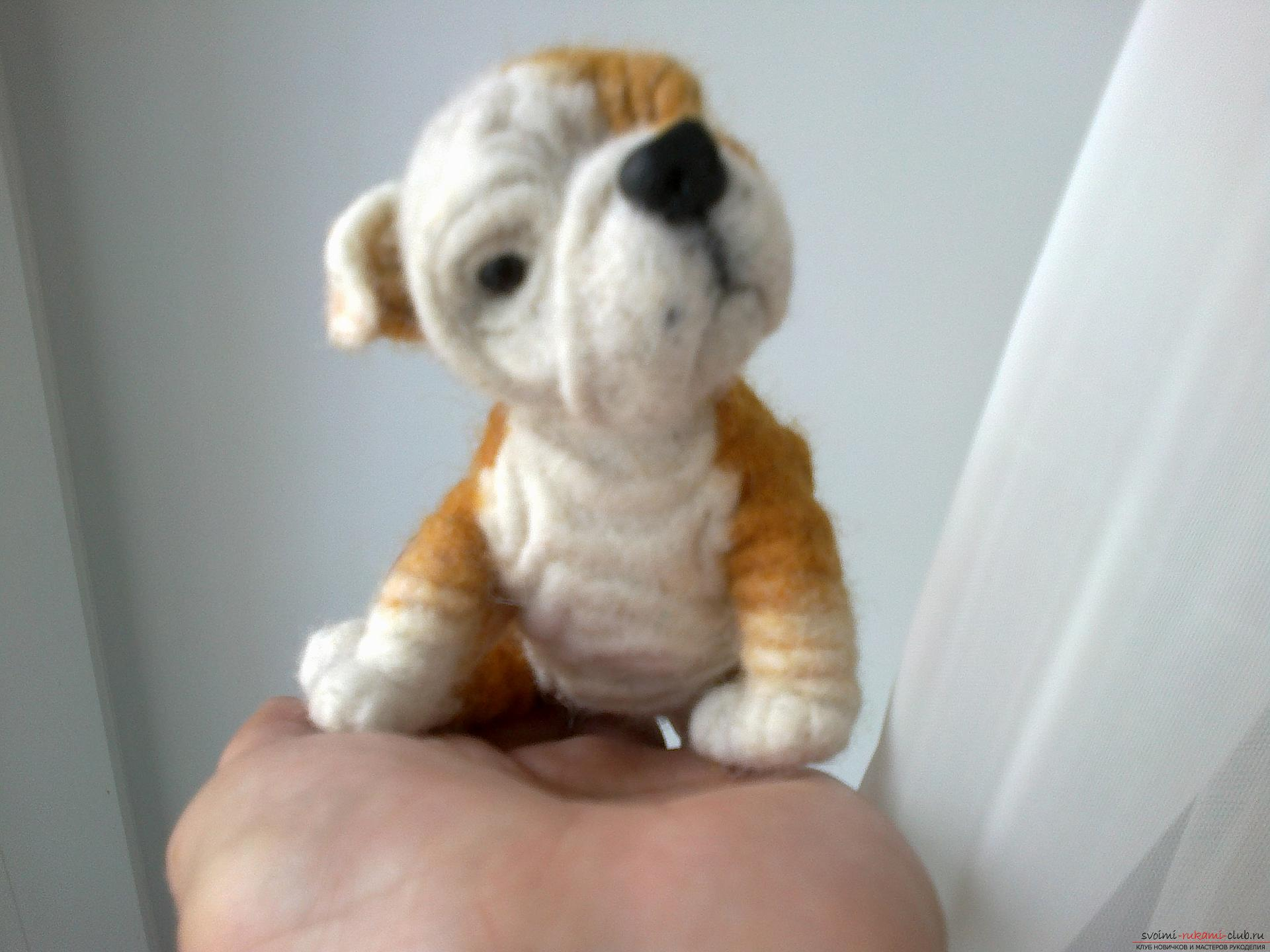 Master class on felting English Bulldog toys made of wool as a gift. Photo №1
