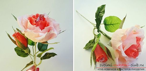 A rose with a candy gift to a woman with her own hands. A detailed description with a photo of the doge for beginner needlewomen. Photo №1