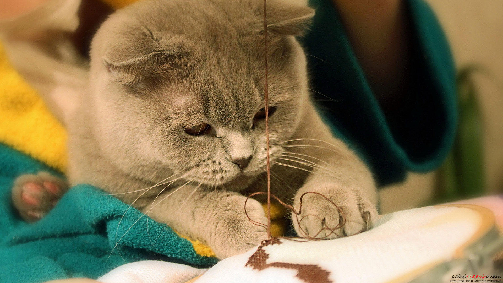 We study cross-stitch embroidery with diagrams. Photo №1