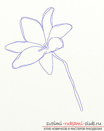 Drawing a lily in stages. Photo №4