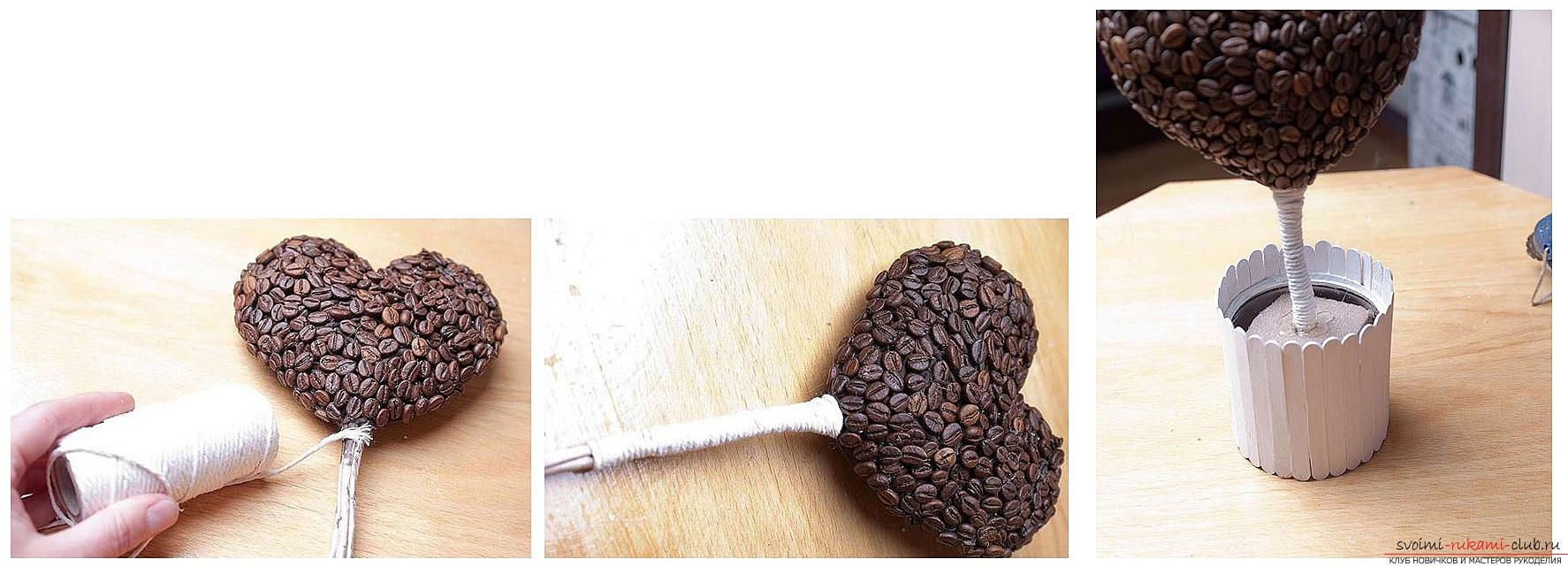 How to make a topiary yourself from coffee beans