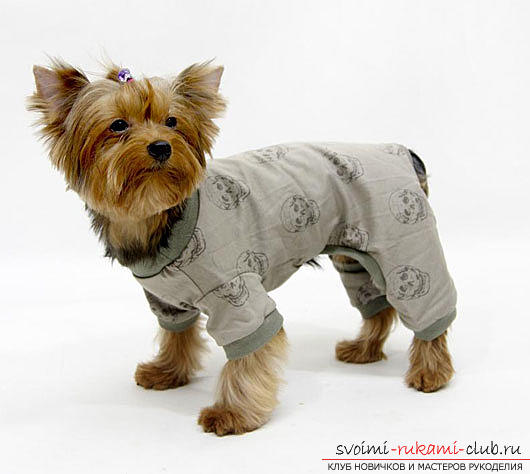 Warm clothes for small dogs with patterns for beginners. Photo №7