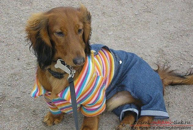A simple piece of clothing and patterns for the dachshund of men's sweaters. Photo №1