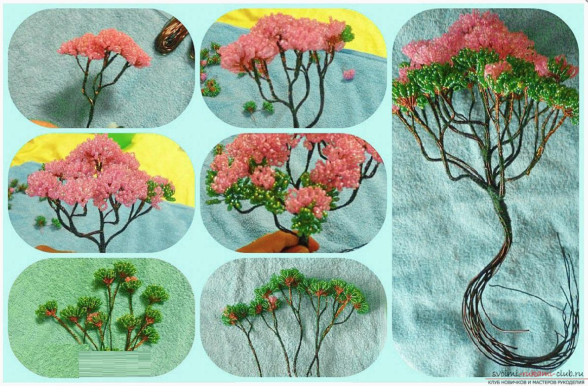 How to make a bonsai tree of beads with your own hands, several master classes of creating bonsai in different color solutions, step-by-step photos and description. Photo number 15