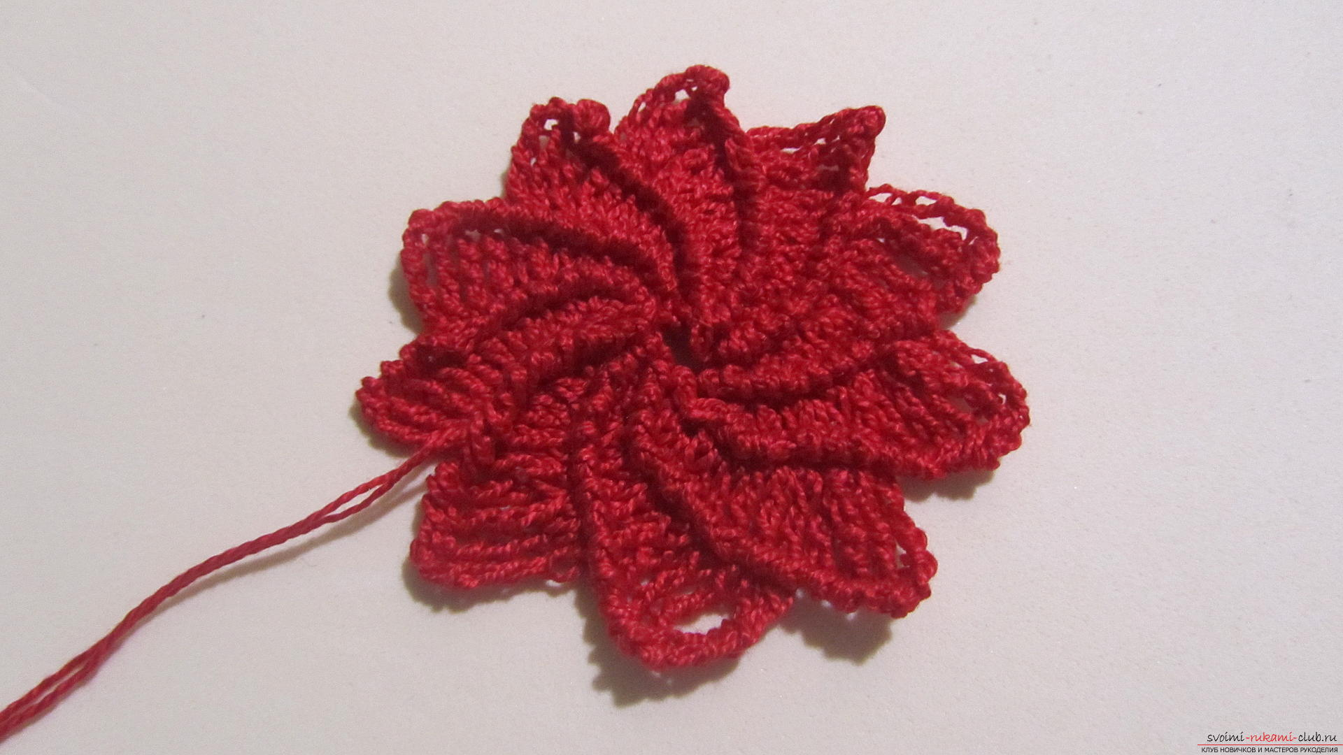 This article will give a lesson on how to crochet the flowers of the Poissentia, a master class with photographs. Photo Number 18