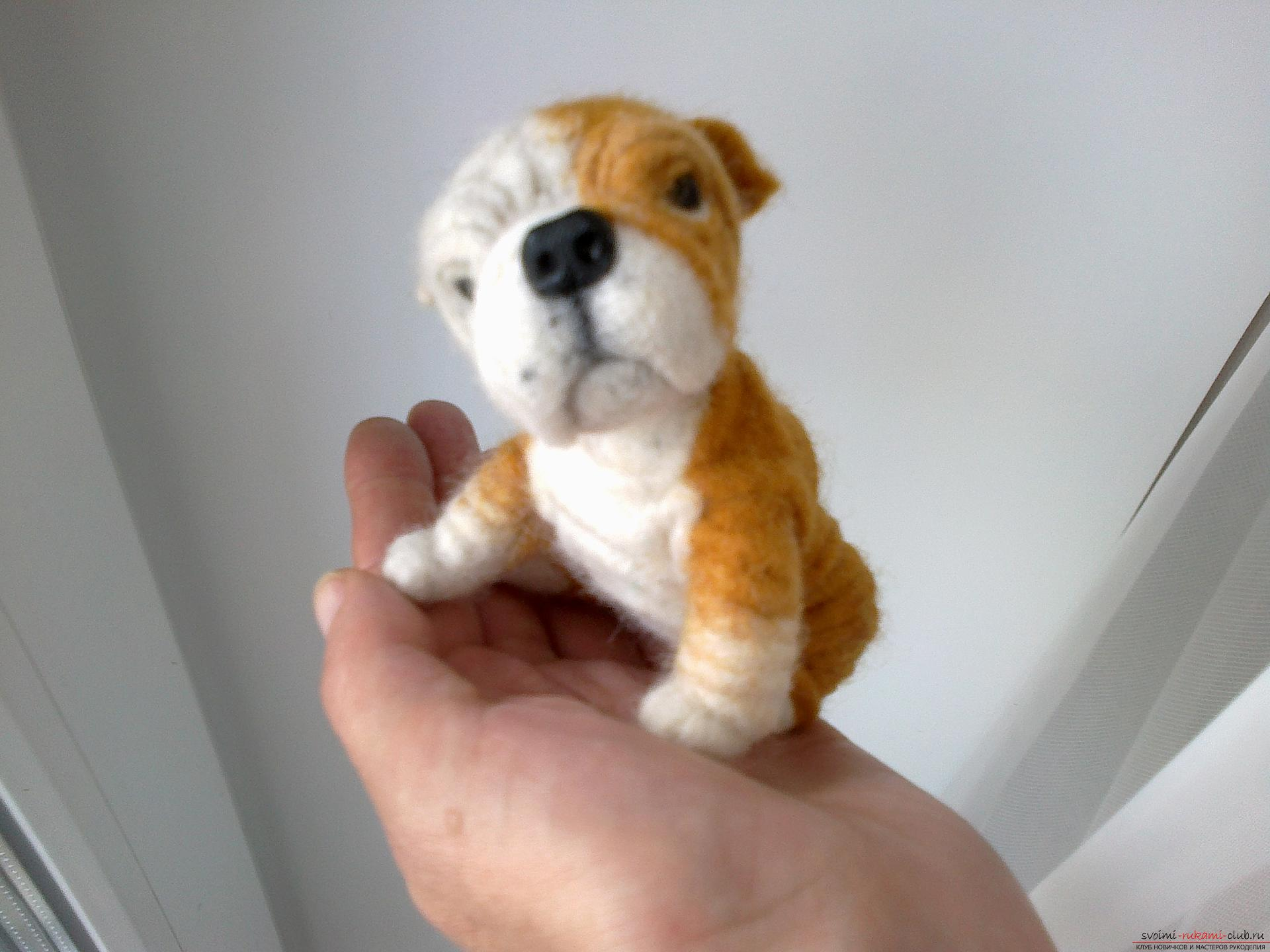 Master class on felting English Bulldog toys made of wool as a gift. Photo №5