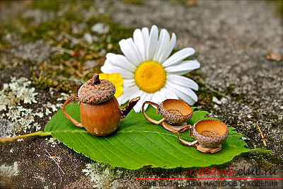 That's what can be made from acorns !. Photo №13