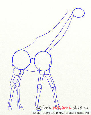 Step by step drawing the giraffe in pencil. Picture №3