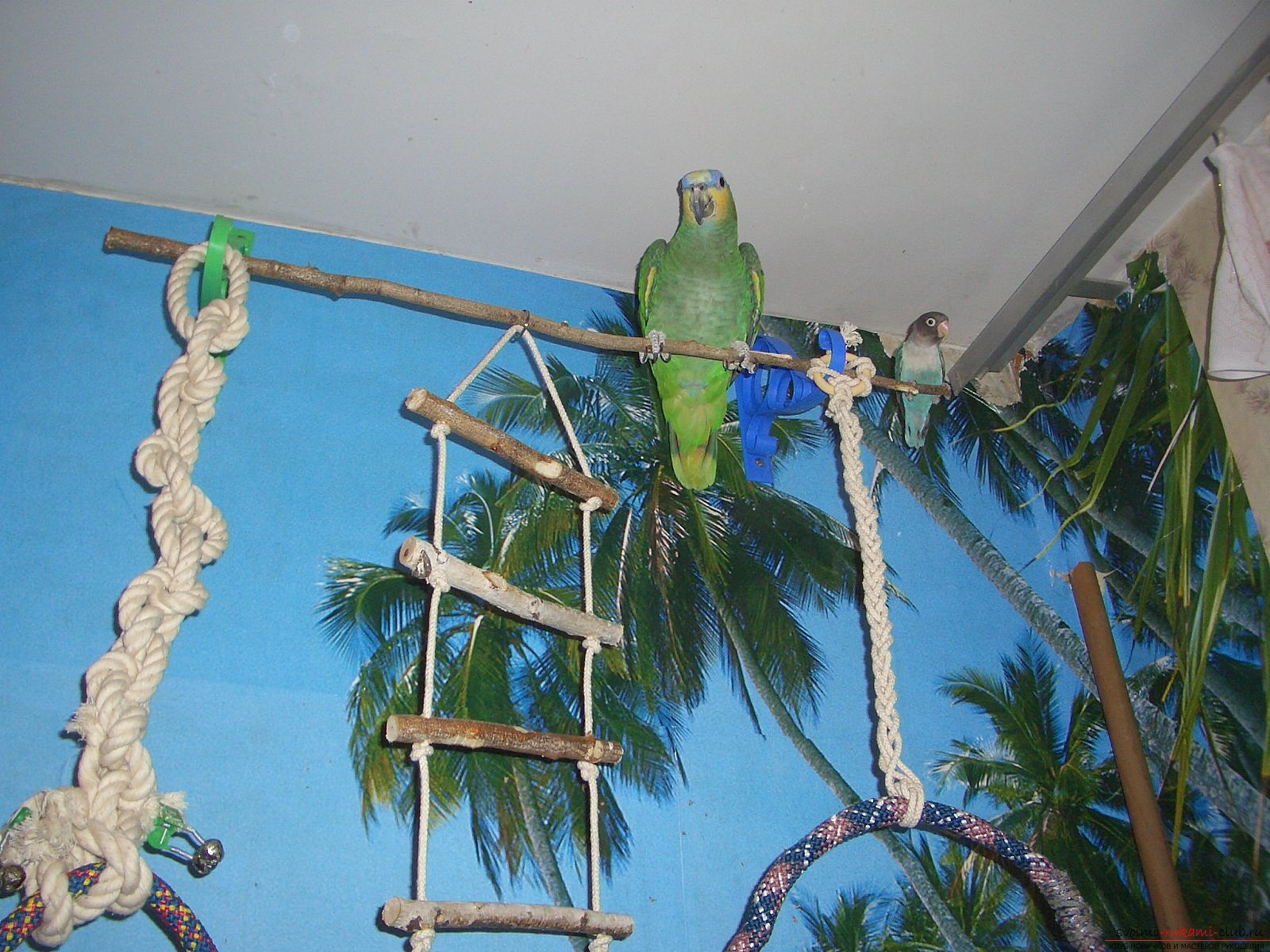 Toys for parrots, made by own hands. Photos of toys and ideas for them .. Photo # 2