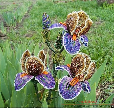 How to weave multicolored iris from beads in French technique, description and step-by-step photos. Photo №1