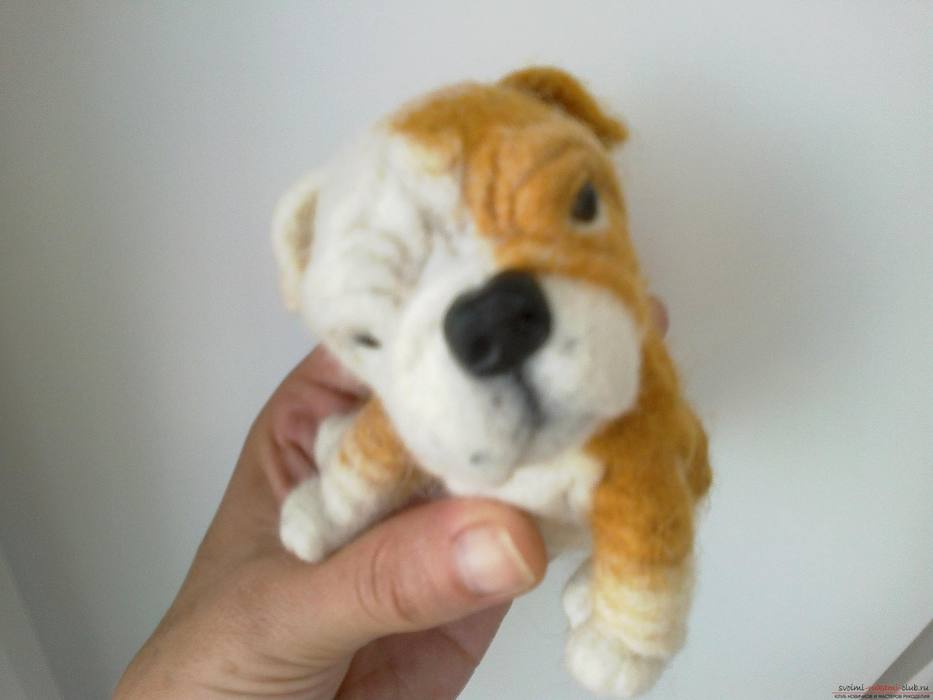 Master class on felting English Bulldog toys made of wool as a gift. Photo Number 9