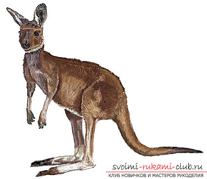 Step by step drawing kangaroo with a pencil. Photo №1