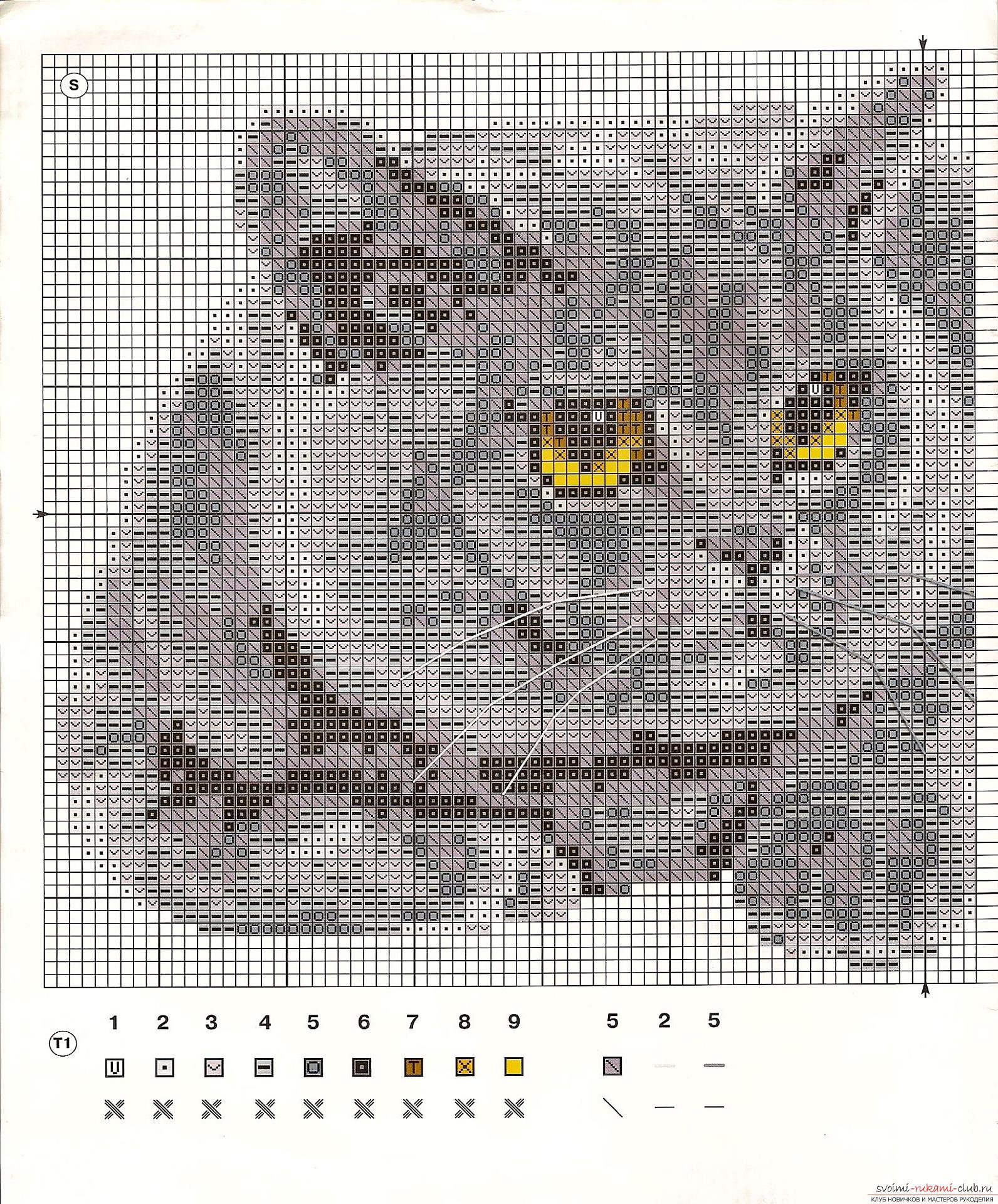 We embroider a gray, beautiful cat, the British, according to the scheme. Photo # 2