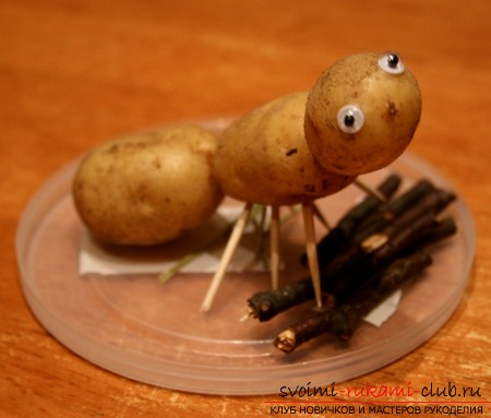 How to make pottery from own potatoes. Photo №1