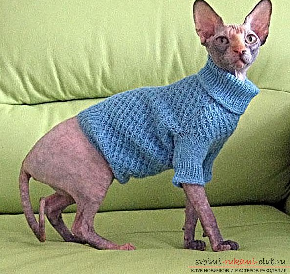 Sweater for a cat and a pattern from old clothes for a beginner. Photo №1