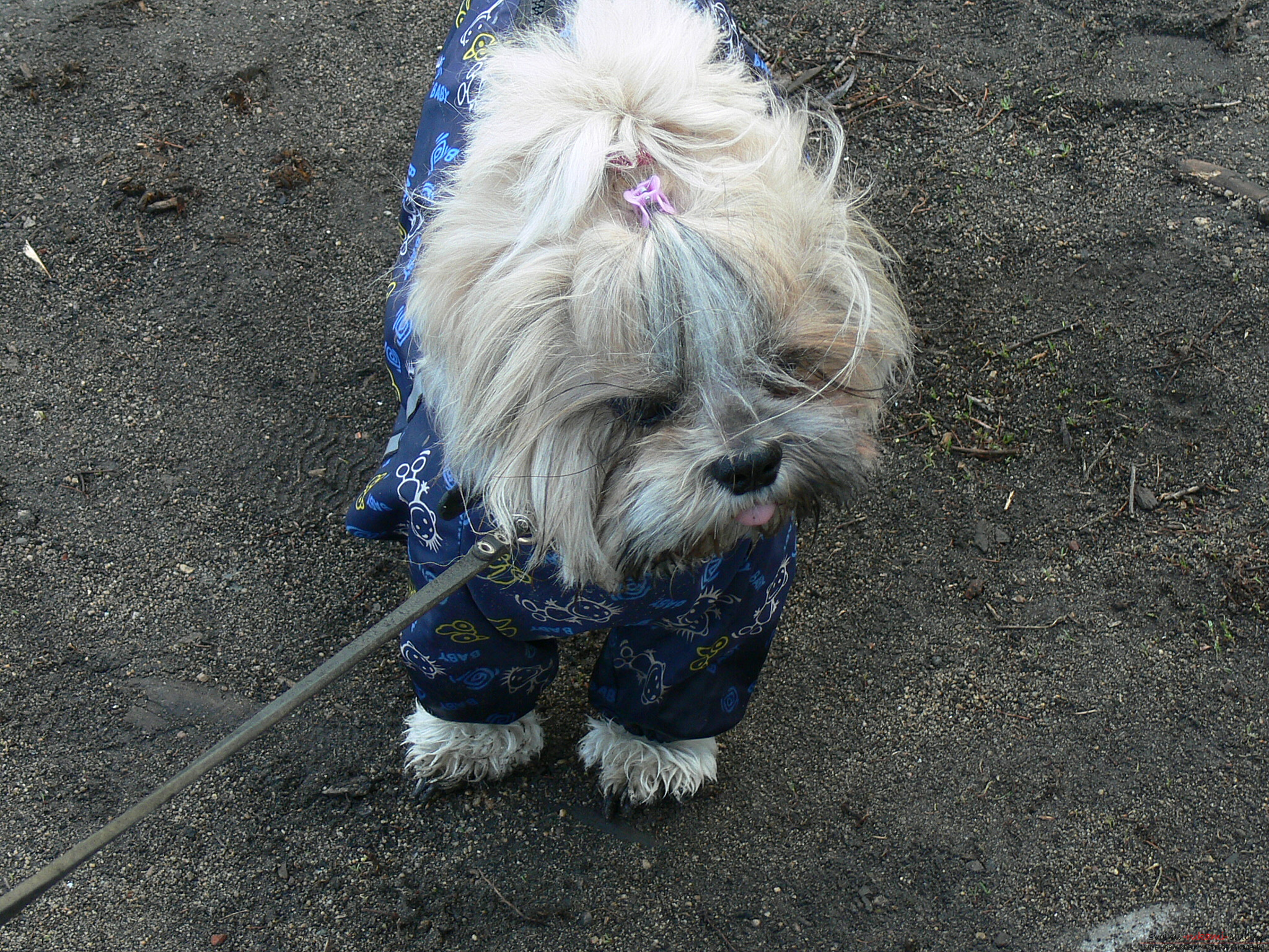 a pattern of a warm waterproof overall for a dog. Photo №6