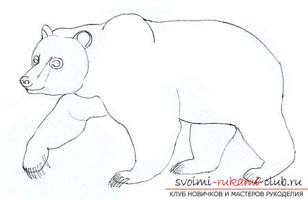 Step-by-step drawing of a bear in a realistic style. Photo №5