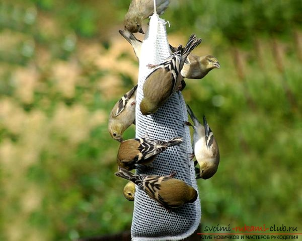 How to make a bird feeder with your own hands. Photo №1