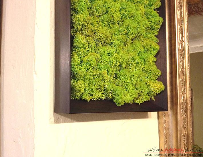Phytodesign, phyto-paintings from moss with their own hands, advice on making and recommendations for care .. Photo # 4