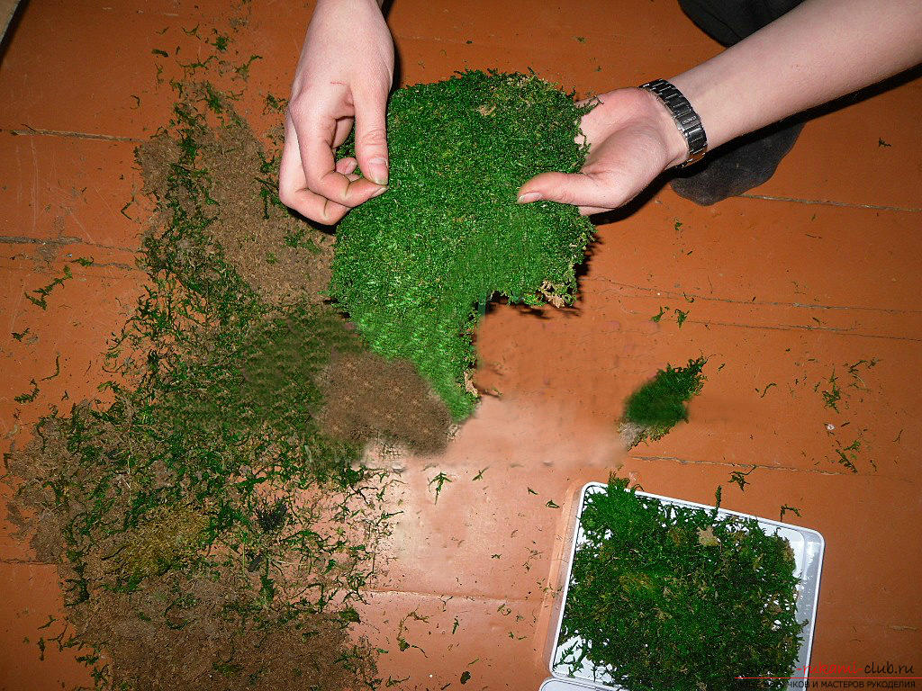 Phytodesign, phyto-paintings from moss with their own hands, tips on making and recommendations for care .. Photo # 6