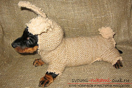 A simple piece of clothing and patterns for the dachshund of men's sweaters. Photo №5