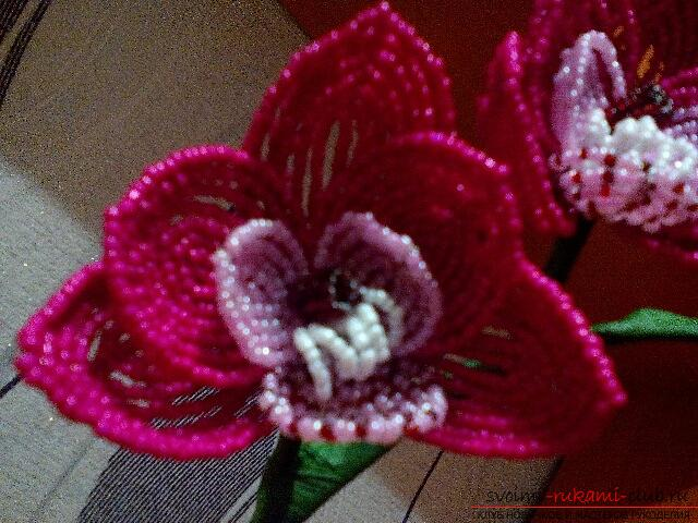 Orchid Phalaenopsis from Chinese beads. Photo №1