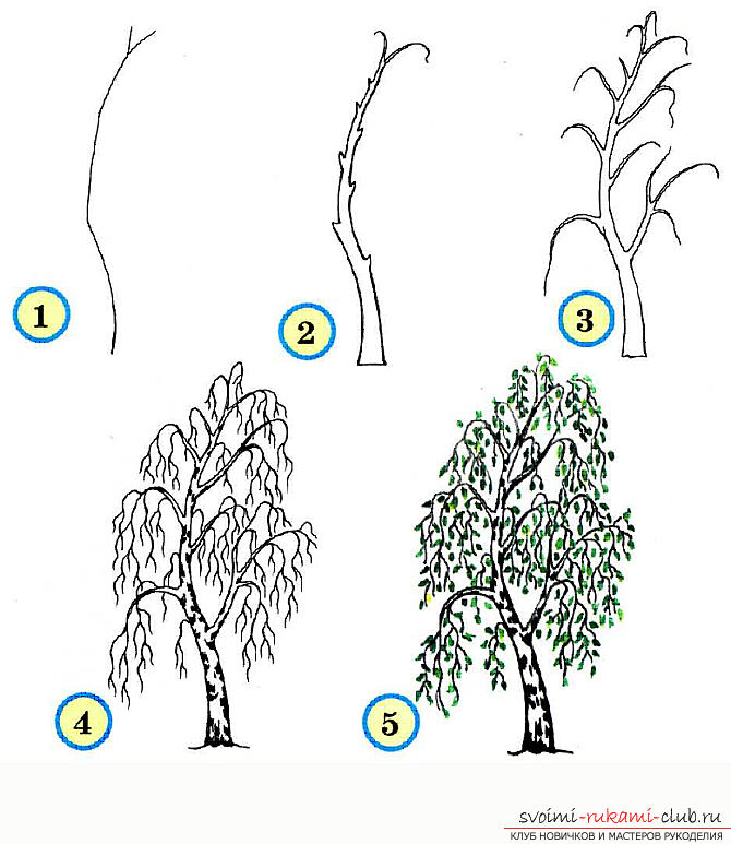 Drawing a tree in stages for beginners. Photo №5