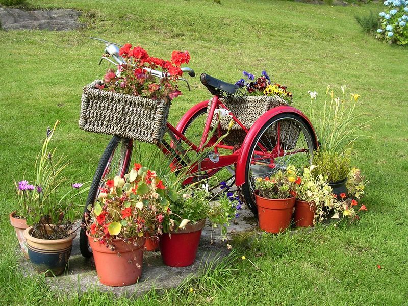 old bike like a flower bed in the garden