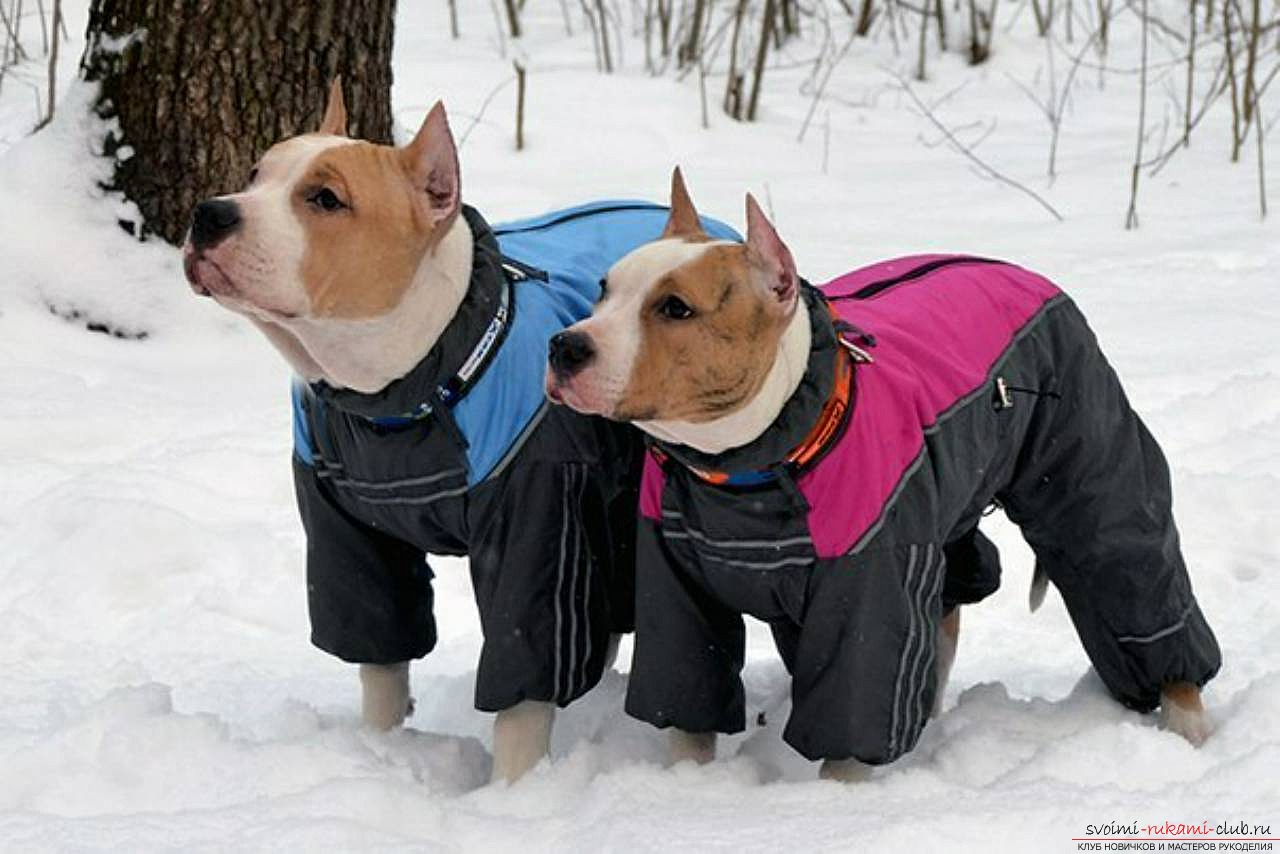 a pattern of a warm waterproof overall for a dog. Photo №8