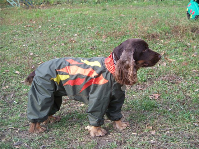Clothes for dogs, made by own hands. Photos and ideas for choosing clothes .. Picture №4